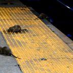 Man Plummets 12 Feet Through Bronx Sidewalk Sinkhole Into Pit of Rats