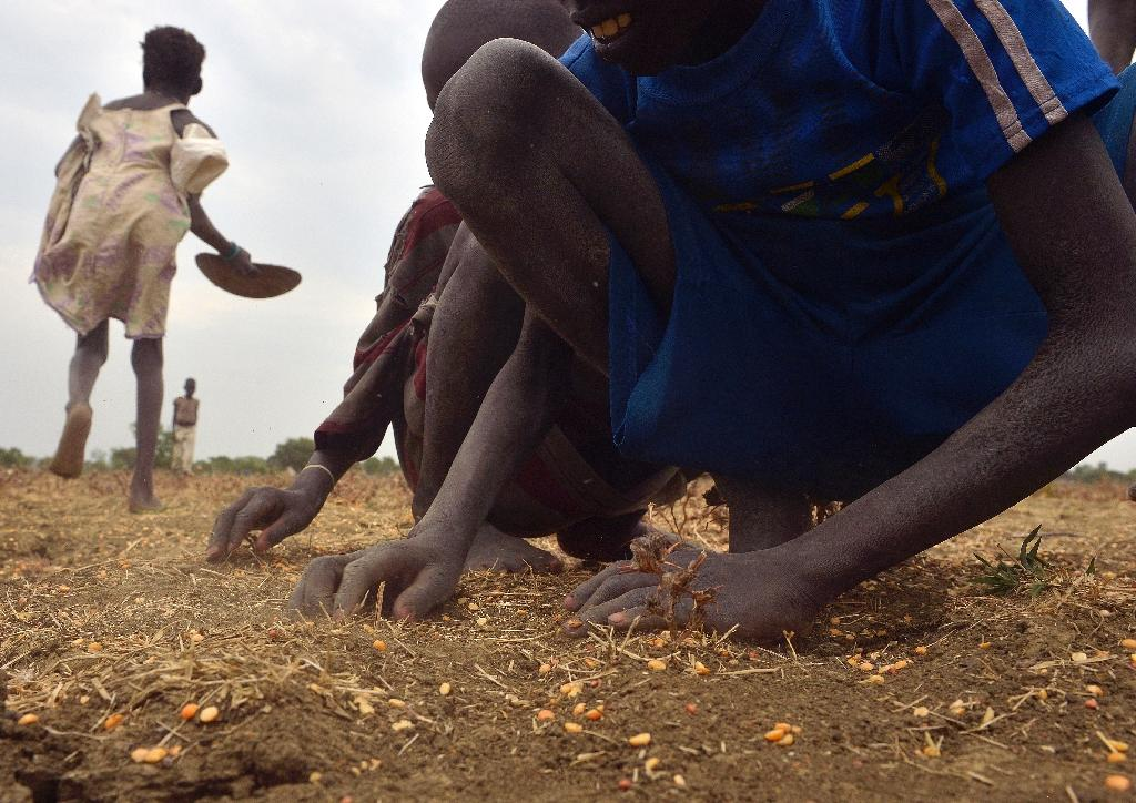 South Sudanese children gather grain spilled from bags busted open following a food-drop on February 24, 2015 at a village in Nyal, Panyijar county, near the northern border with Sudan, on February 24, 2015 (AFP Photo/Tony Karumba)