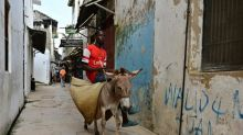 Kenya bans controversial donkey slaughter trade