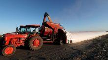 Argentina no subirá tasa a exportaciones granos pese a su golpeada economía: ministro Agricultura