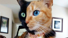 Believe It or Not, the Internet's Favorite Two-Face Cat Is Real