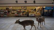 FOTOS Y VÍDEOS | Animales salvajes toman las calles de España y del mundo ante el confinamiento por el coronavirus