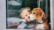Estudo indica que níveis de estresse do dono podem afetar seus cães