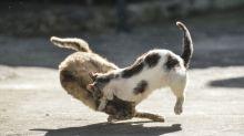 """Liveschalte gecrasht: Dieser """"Catfight"""" geht viral"""