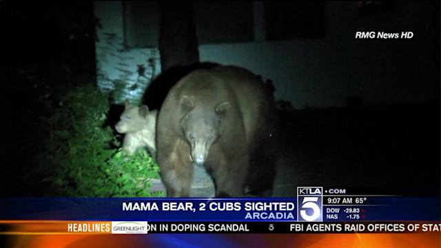 Mother Bear, 2 Cubs Spotted in Arcadia Neighborhood