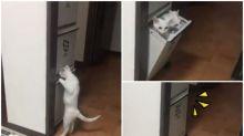 【新片速報】日本喵星人匿藏新招 匿入鞋箱自己關門