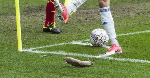 Foot - WTF - Le public de Brøndby jette des rats morts sur les joueurs de Copenhague