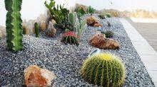 Piante Grasse: Come Curarle e Usarle in Casa e in Giardino