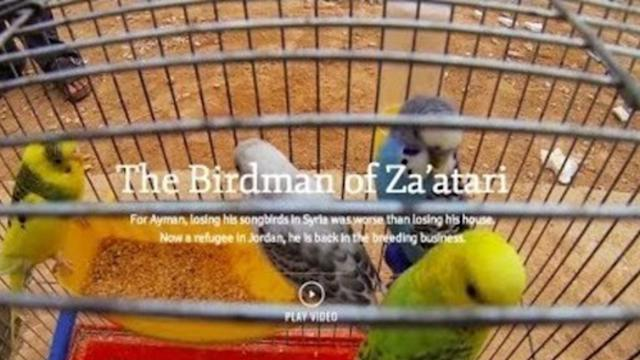 Syrian Refugee Sets Up Bird Business in Za'atari Camp