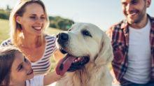 新冠疫情突顯狗股策略的盲點