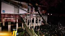 Trees toppled, damage reported across area