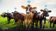 Semtech and lar.tech Enable Smart Ranching with LoRa Technology