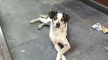 Ativista divulga imagens de cachorro no Carrefour antes de ser morto