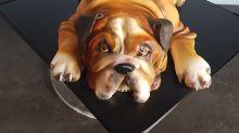 Confeiteira cria bolos em formato de animais que vão te impressionar