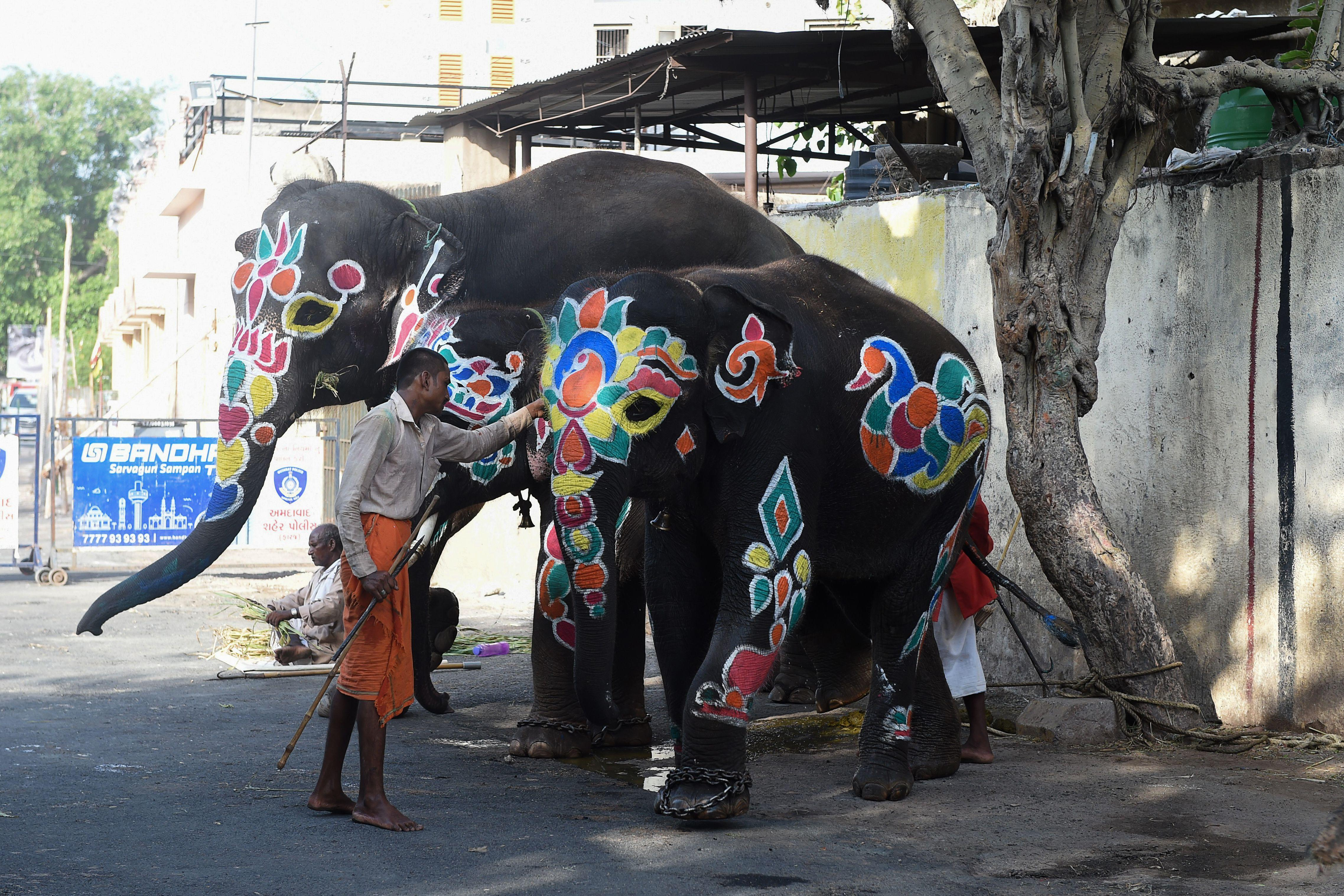 A Mahout is seen with decorated elephants on the eve of the annual Rath Yatra of Lord Jagannath festival in Ahmedabad on June 22, 2020. (Photo by SAM PANTHAKY/AFP via Getty Images)