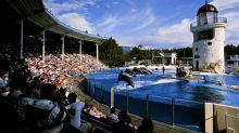 SeaWorld Hits Out At Critics Amid Virgin Holidays Ticket Row