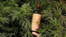 Sem álcool, vinho de maconha deixa 'chapado' e livre da ressaca