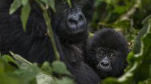 Animali selvatici, persi quasi 2/3 delle popolazioni globali