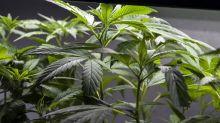 Milano, 20enne arrestato per spaccio di marijuana al parco Solari