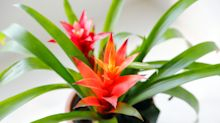 The 8 most beautiful plants on Amazon that you (probably) won't kill