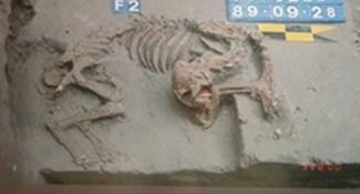台南挖到寶 意外揭5000年祕密