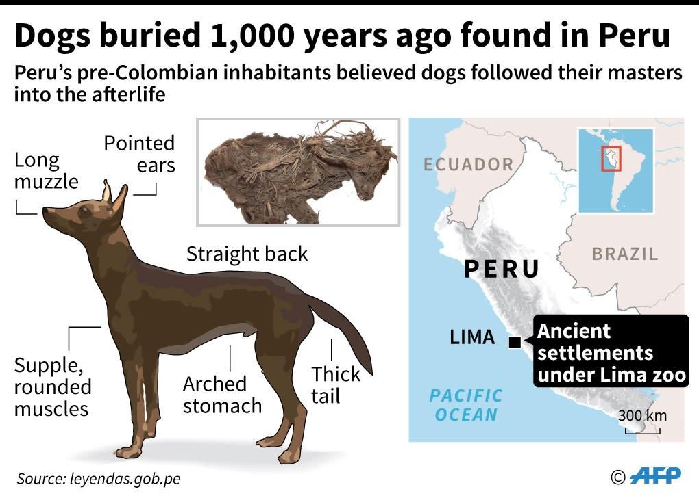 Dogs buried 1,000 years ago found in Peru (AFP Photo/Gustavo IZUS)