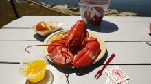 All shell, no shock: Lobster prices strong, season picks up