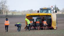 Farms demand migrant labour scheme as UK workers 'leave contracts early'