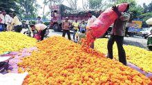 Maharashtra: Flower markets shut, mogra growers stare at deep losses