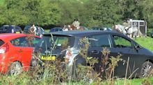 Coronavirus: Over 120 people meet for stag hunt 'making mockery of social sacrifices by others'