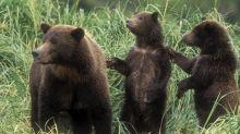 Gli orsi hanno mangiato Riccioli d'oro?