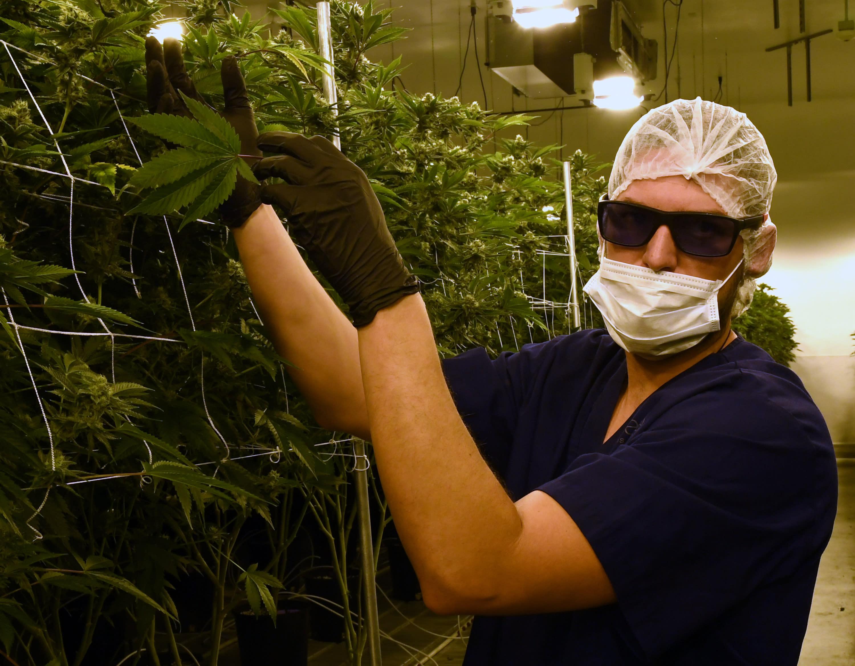 При эпилепсии марихуана в чехии покурить марихуану