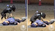 Video of police dog performing CPR goes viral