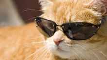 Blockchain's Real Cool Cats