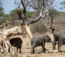 A Leading Elephant Conservationist Has Been Murdered in Tanzania