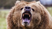 The stock market is still being savaged by bears