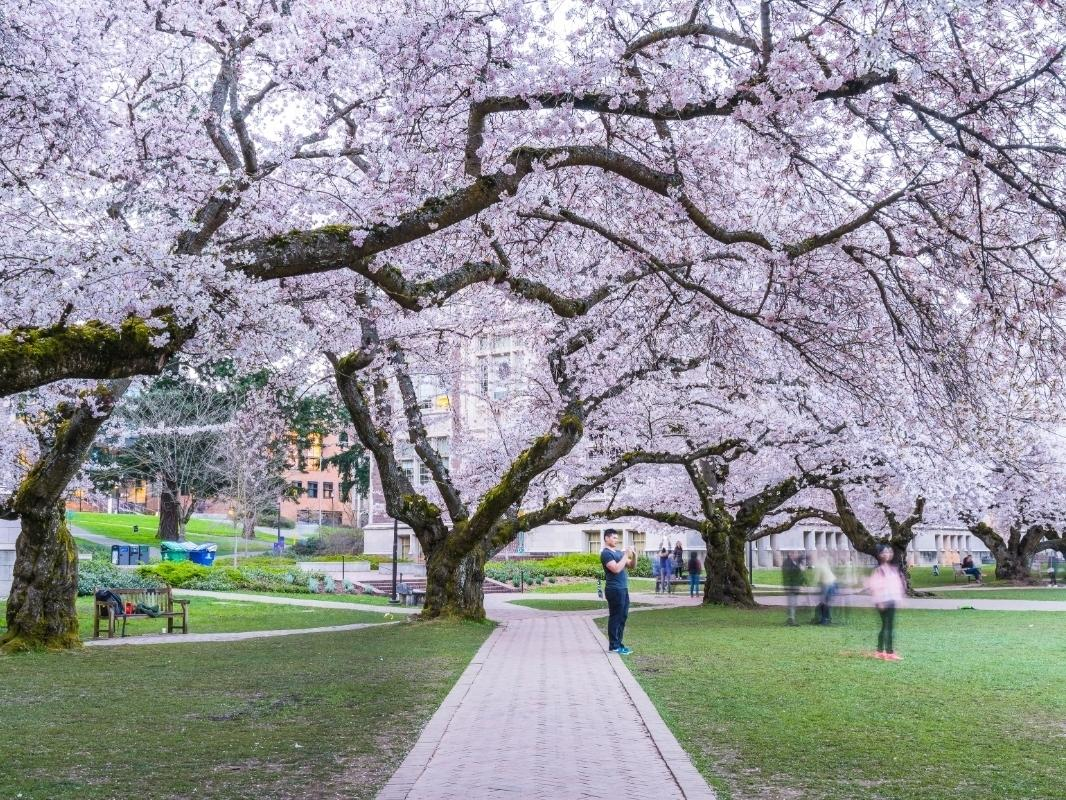 Washington's top-ranked school is Seattle's UW Campus, but 12 others were highly-rated as well.