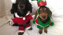 In pictures: Here's a 'paw-some gallery' of some of Britain's most festive pets