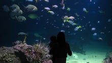 Stranger accused of kissing boy, 2, on lips at Sydney aquarium