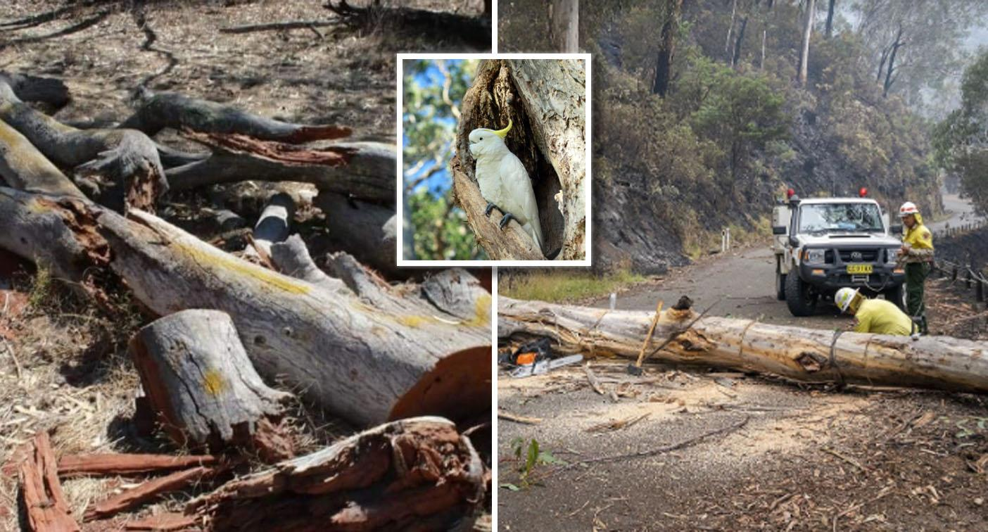 Controversial idea for battered bushfire trees slammed as 'plain ridiculous'