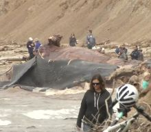 Experts say blue whale washed up on Bolinas beach likely hit by ship