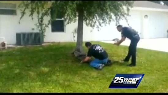 Caught On Video: Giant gator tied up on Port St. Lucie front lawn