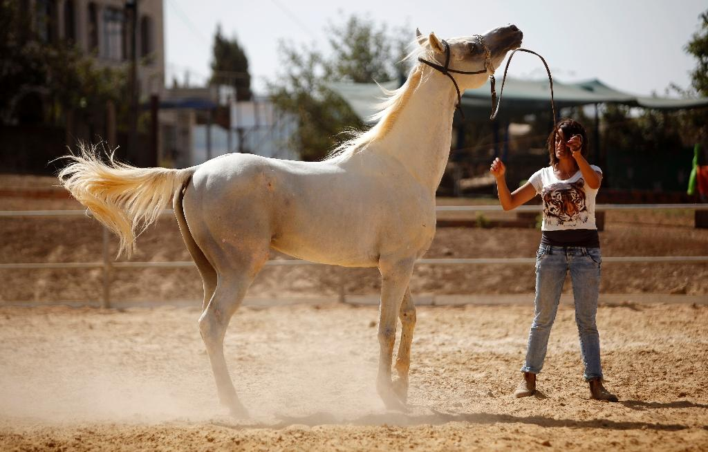 Horses are an important part of the culture in the ranches and cattle farms spread among the rugged hills and plains of the Israeli-occupied Golan Heights (AFP Photo/Jalaa Marey)