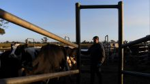 Competition to boost milk price: Rabobank