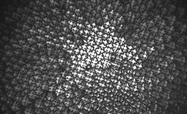 Scientists learn to build better metals by freezing alloys in space