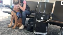 WATCH: Support dog calms down its owner suffering from panic attack