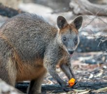 Australian tourism industry seeks urgent help as cost of bushfires grows