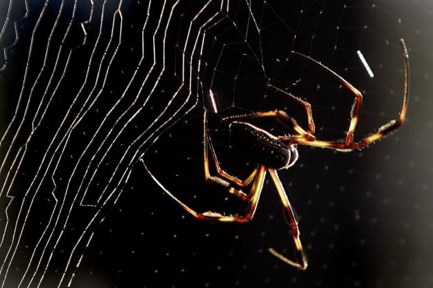 Nanotube-soaked spiders spin super-strong silk