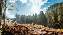 Why Shares of Weyerhaeuser Were Up in April