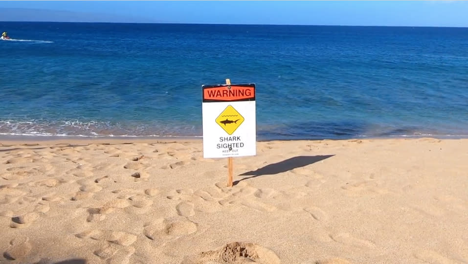 Snorkeler Injured In Shark Attack In Hawaii